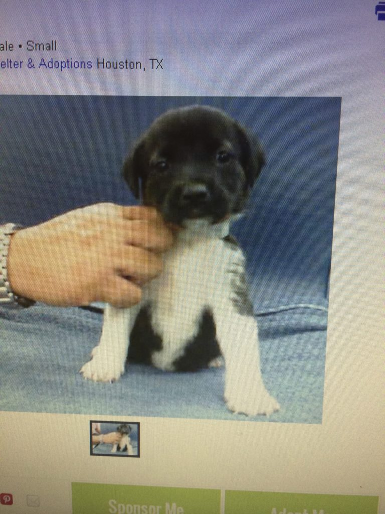 Bear's shelter picture. I saw his ad and knew I needed to meet him. I adopted him that very day.