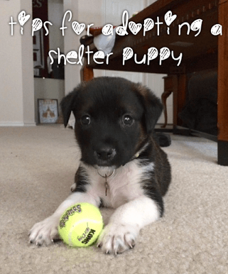 5 Things Nobody Tells You About Adopting a Shelter Puppy